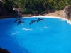 Dolphins at Loro