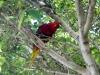 Parrot at Loro